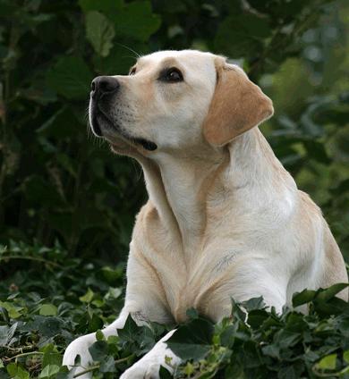 Jenny Dad Dog